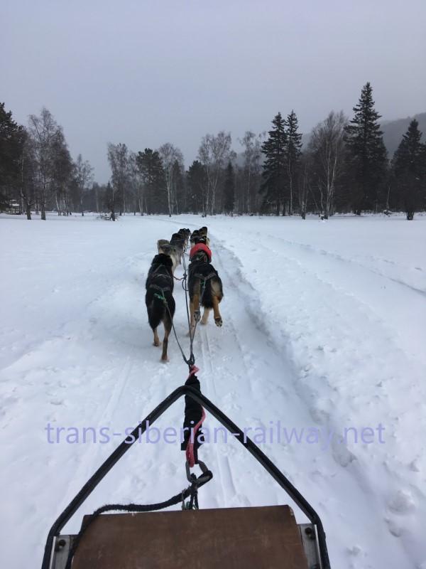 ロシアで犬ぞり体験!!