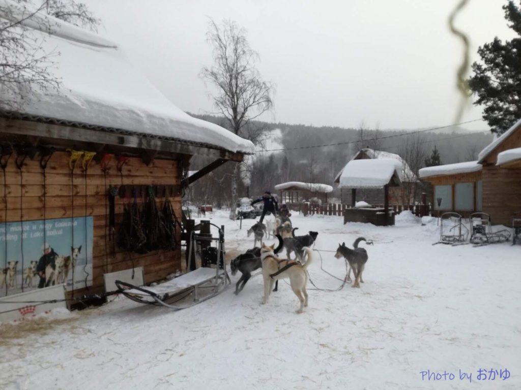 Baikal Dog Sledding Centre:ロシア・リストヴャンカで犬ぞり